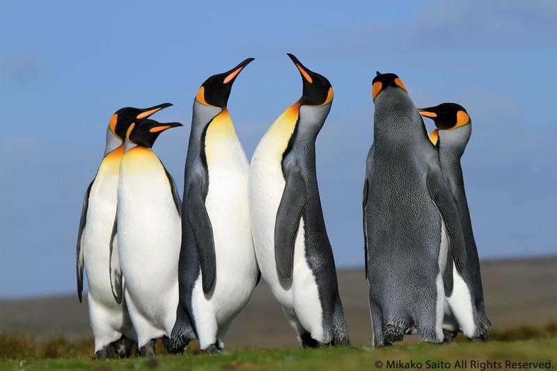 ペンギン写真集のお知らせです